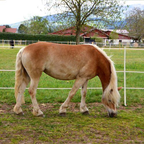 pferd-12