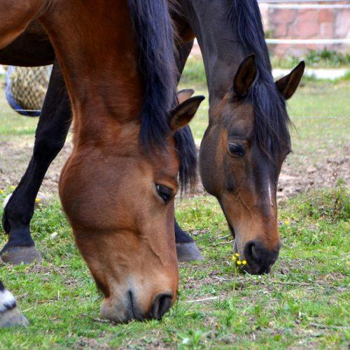 pferd-13