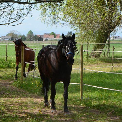 pferd-20