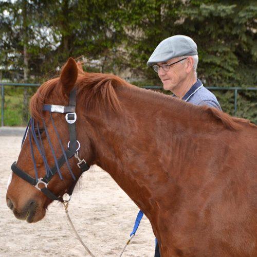 pferd-6